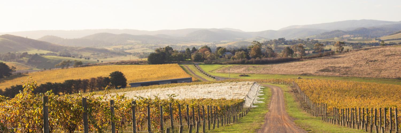 Luke Lambert vineyards